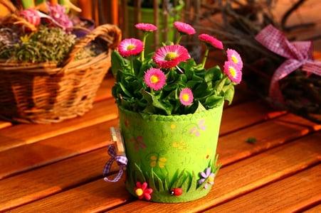 spring backyard garden tips
